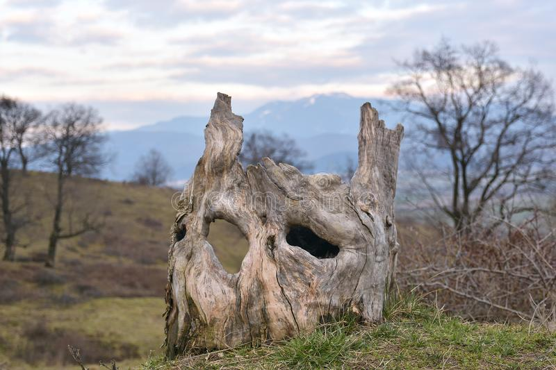The tree trunk looks like human face. stock photography