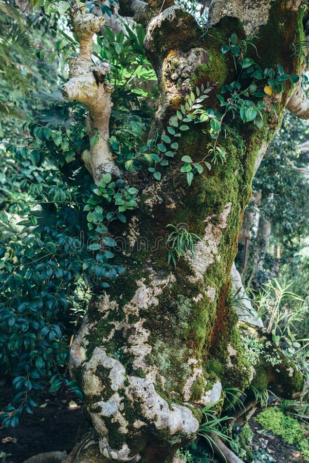 Tree trunk with moss. Natural tropical background nature forest. royalty free stock photos