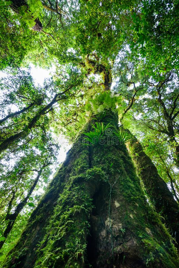 Tree trunk with moss and orchid in rainforest under view at Doi royalty free stock photo
