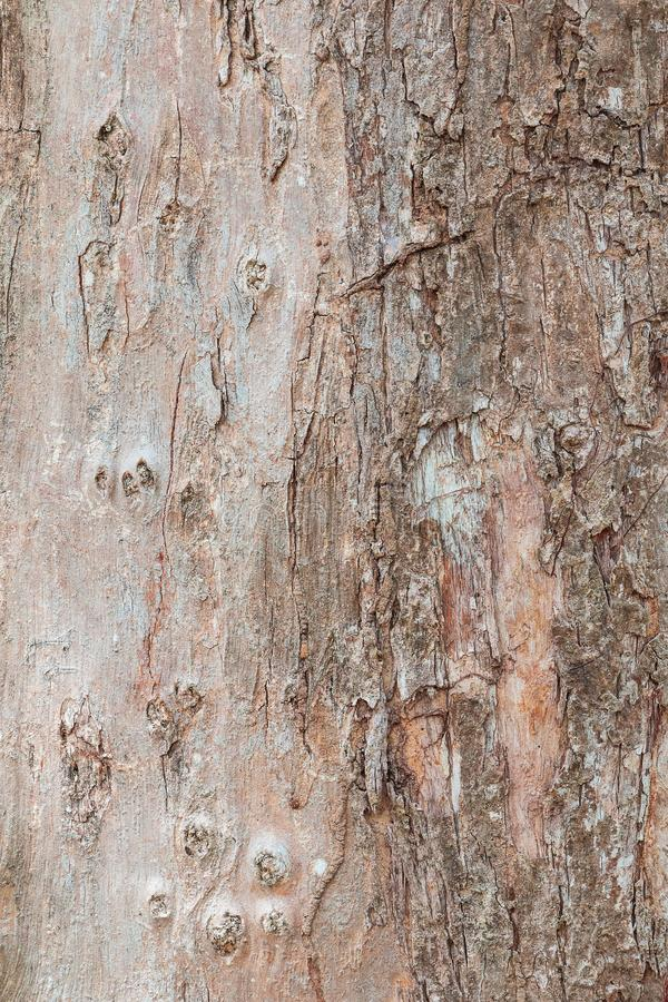 Tree trunk nature. bark texture pattern wood for background image vertical stock photography