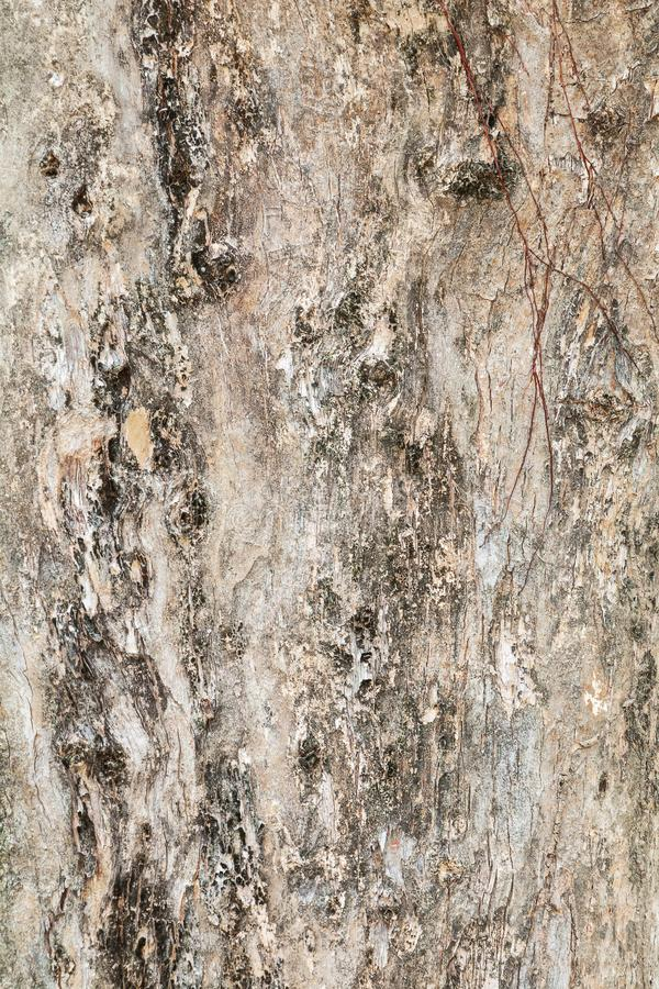 Tree trunk nature. bark texture pattern wood for background image vertical stock photos