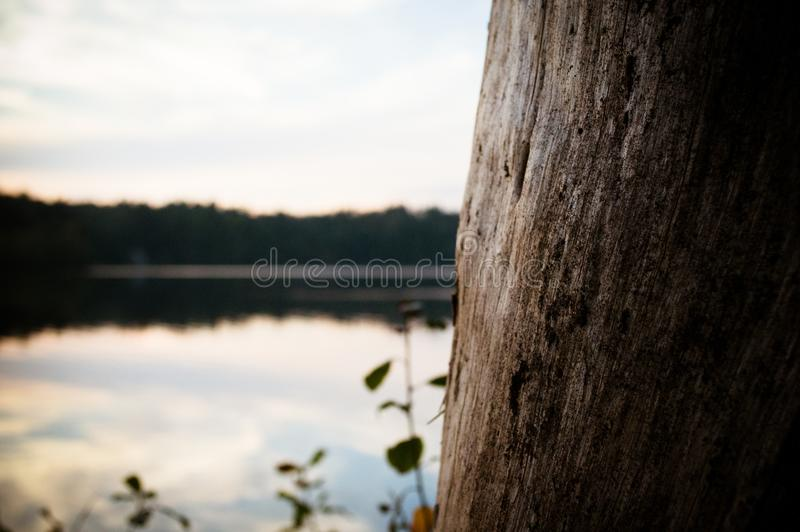 A Tree Trunk Overlooks a Pond at Sunset royalty free stock photography