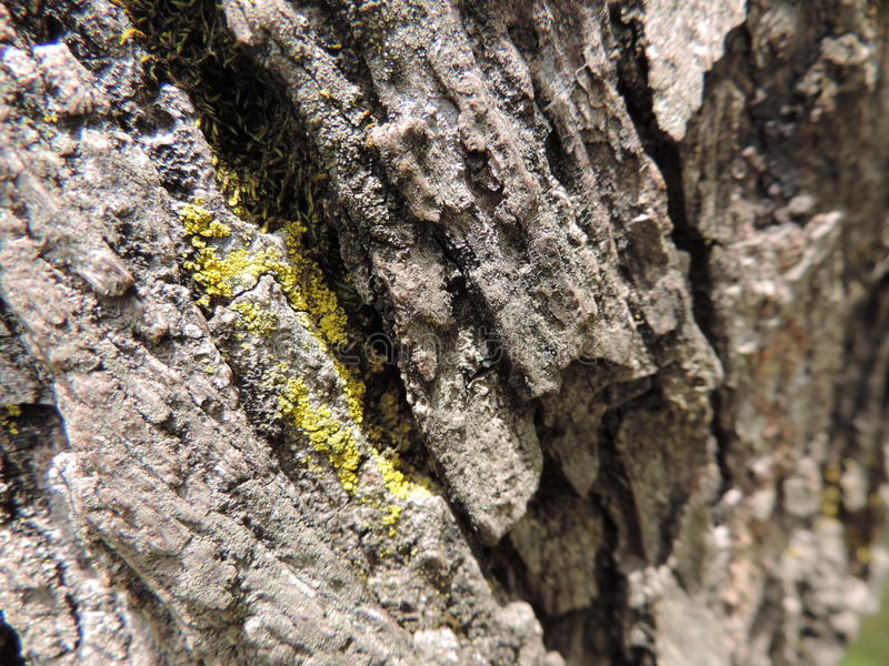The tree Trunk stock photography