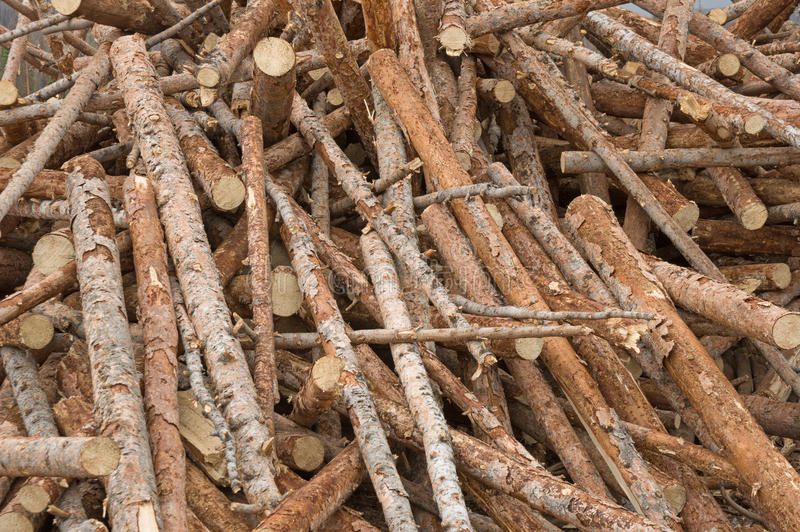 Tree Trunk Pile. That is part of a salvage logging operation stock photos
