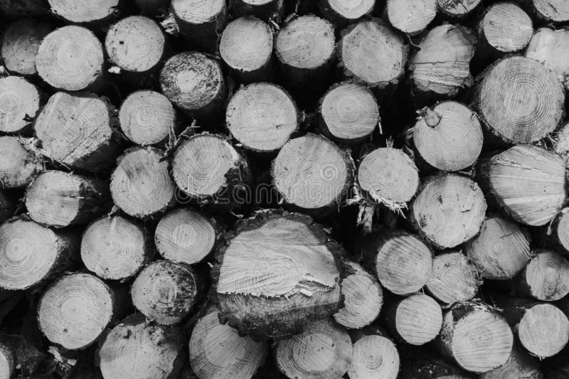 Tree trunk pile section, forming circle shapes. Wood land. Black and white stock photos