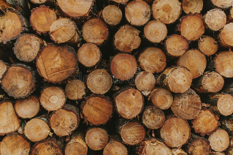 Tree trunk pile section, forming circle shapes. Wood land royalty free stock photos