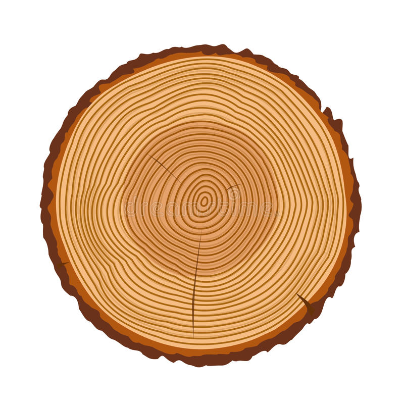 tree trunk rings vector texture stock vector illustration of rh dreamstime com wood texture vector ai wood texture vectors free
