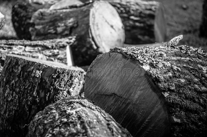 Tree trunk sawn into pieces firewood in black and white. Large Pile of Chopped Cut Trunk Firewood stock images