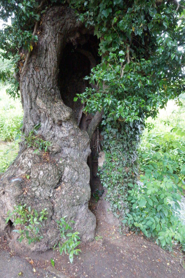 Tree Trunk with slotted hole stock images