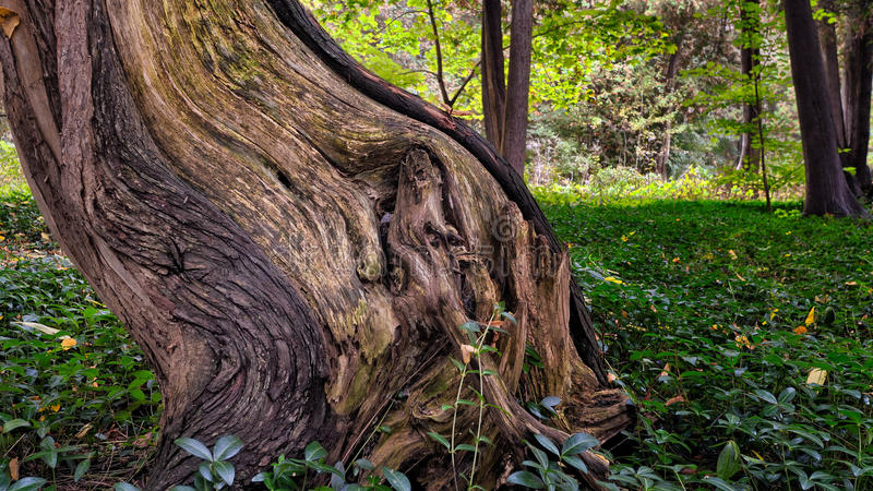 Tree Trunk Surrounded by Green Grass stock photography