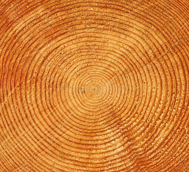 Free Tree Trunk Texture Royalty Free Stock Photo - 7836535