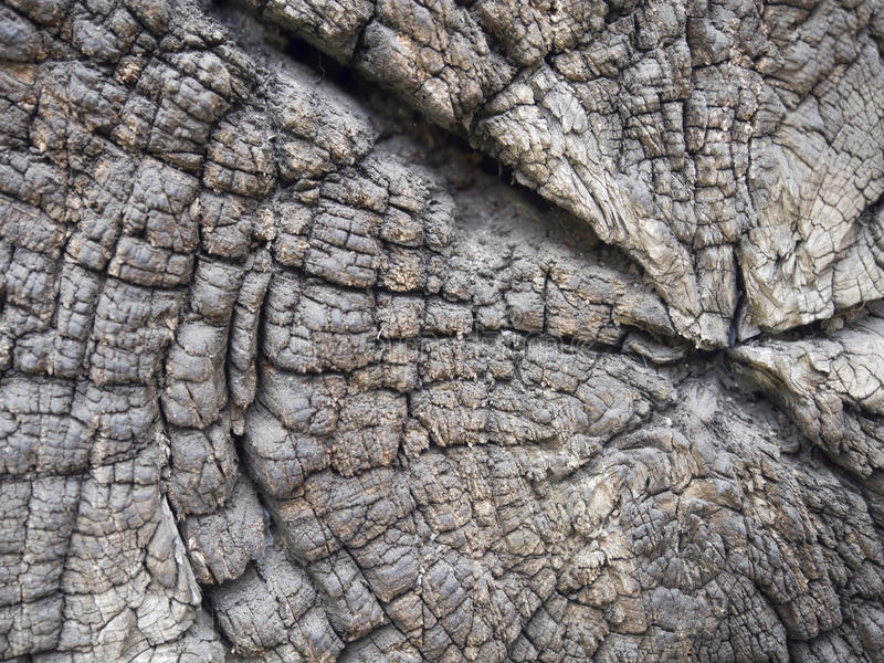 Tree trunk texture stock photo