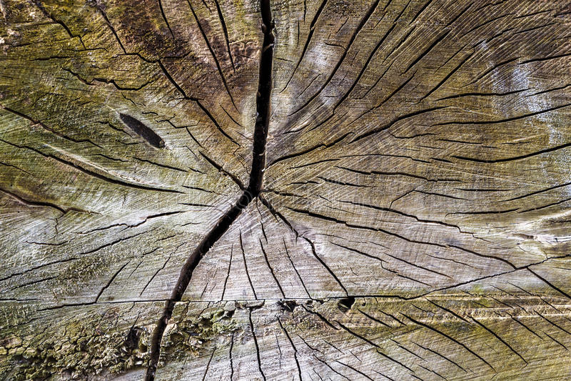 Tree Trunk Texture stock photography