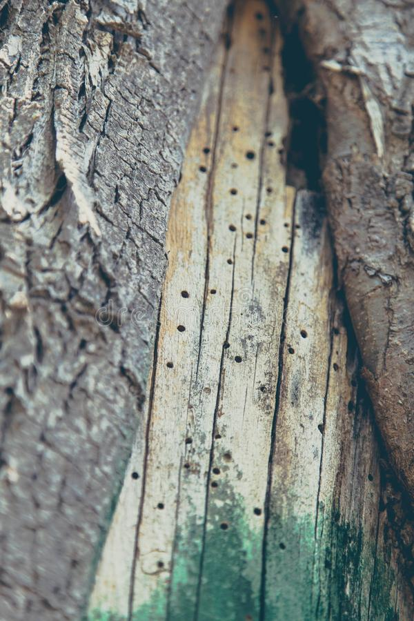 Tree Trunk Texture with Green stock photography
