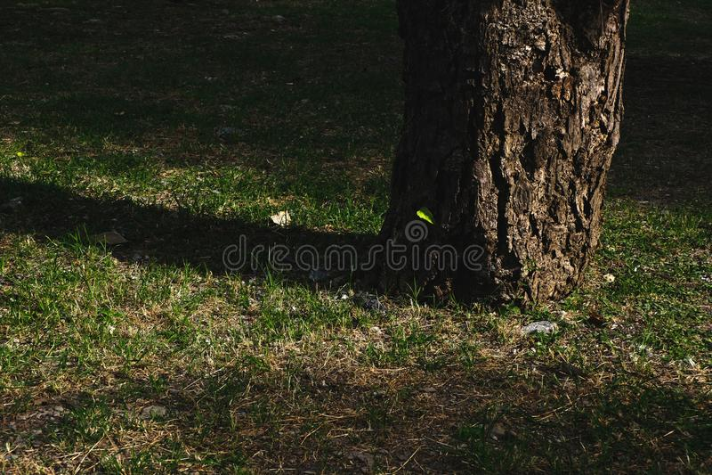 Tree trunk with warm sunshine stock photo