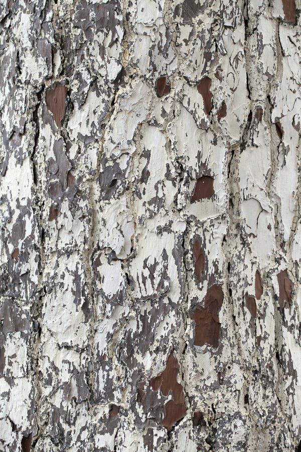 Free Tree Trunk - Wood Bark Texture Royalty Free Stock Photography - 36759177