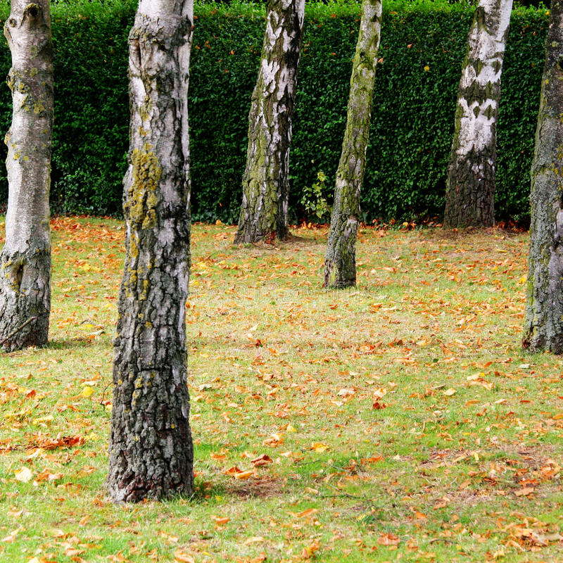 Tree Trunks Stock Images