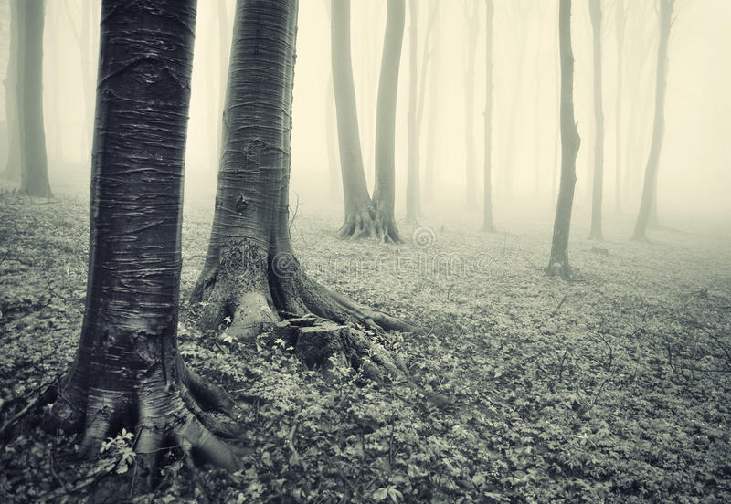 Tree trunks in a dark horror like forest royalty free stock image