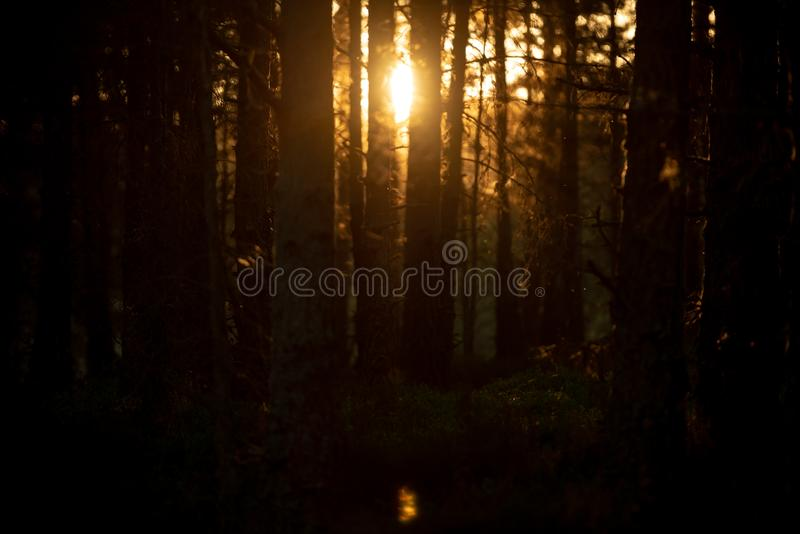 Tree trunks, Cairngorms National Park, Scotland royalty free stock image