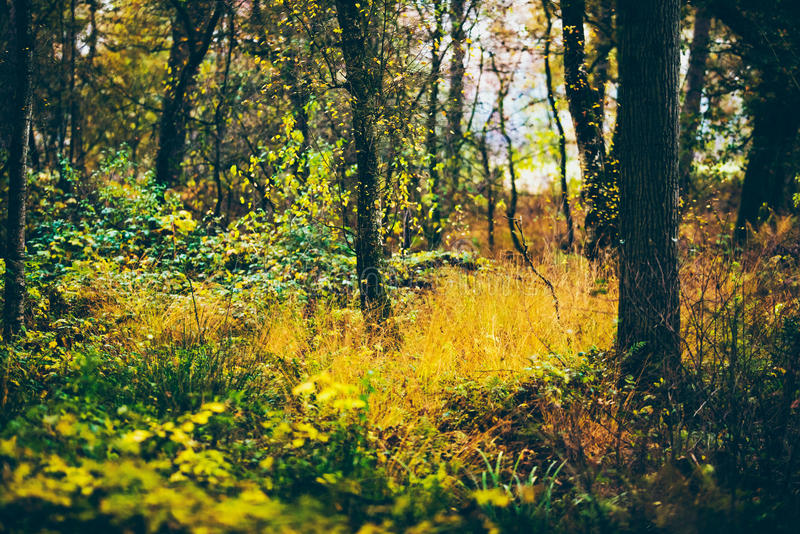 Tree trunks with yellow grass and leaves in autumn forest. royalty free stock photo