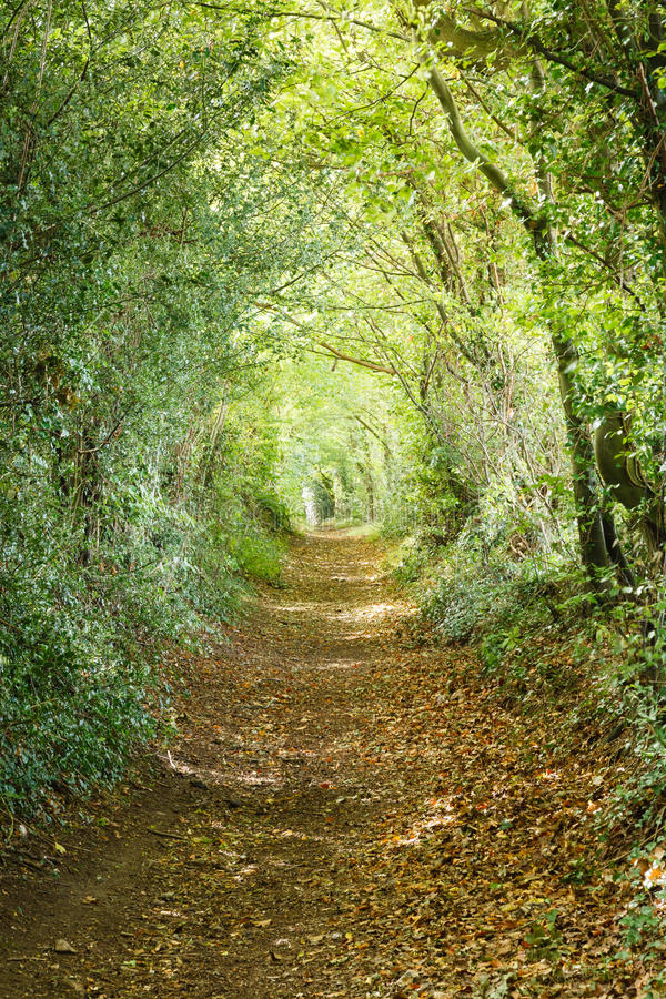 Download Tree tunnel stock image. Image of hills, backgrounds - 26728747
