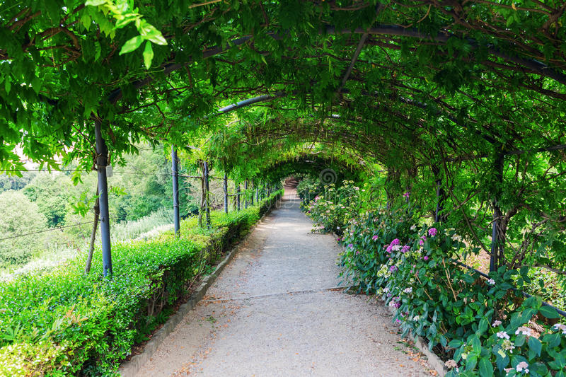 Tree Tunnel in the Giardino Bardini, Florence, Italy stock photo