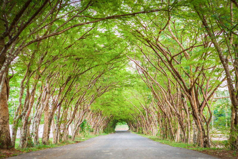 Tree tunnel road. The road straight into the tree tunnel stock photography