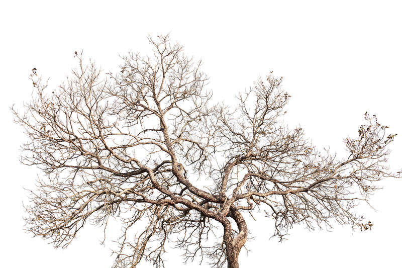 Tree twigs with bare trunks and branches.  royalty free stock photography