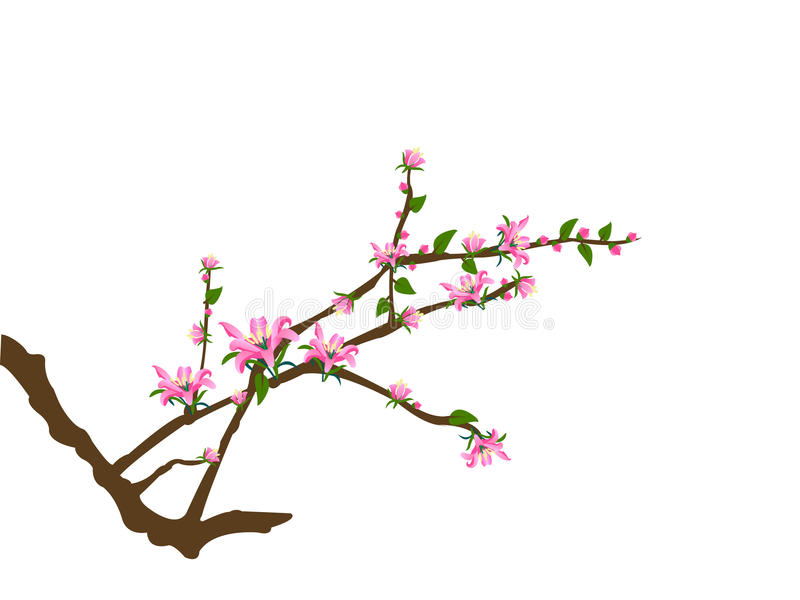 Tree twigs and pink flowers vector illustration