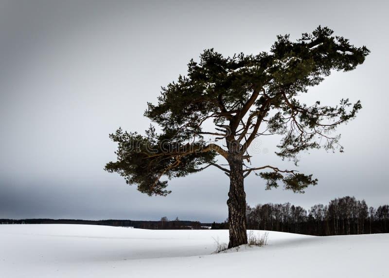 Tree2 fotografia stock libera da diritti