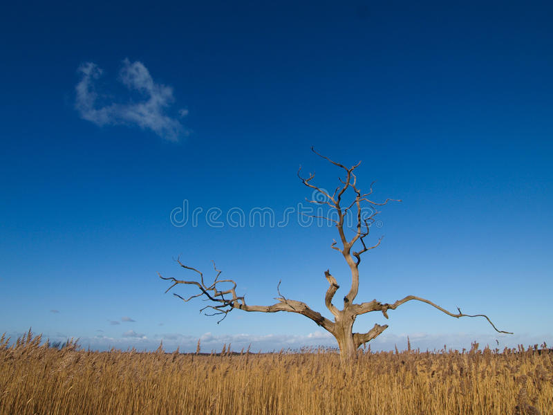 Tree Under Blue Sky Stock Photography