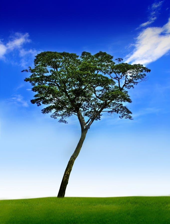 Tree under blue sky royalty free stock photo