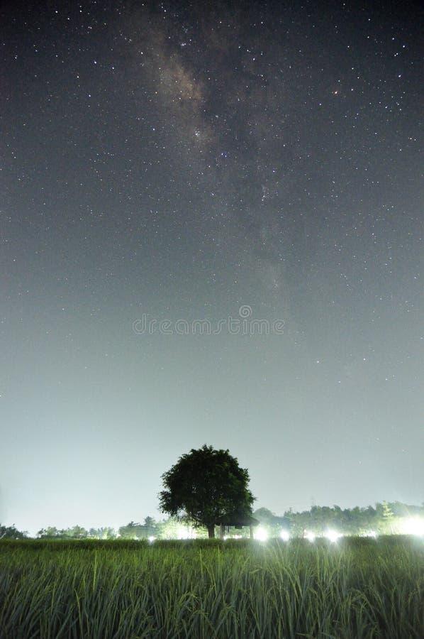 Tree under milkyway stock image