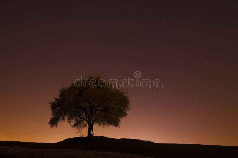 Tree under the night sky stock photos