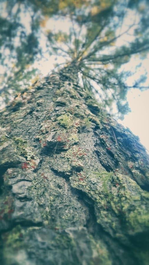 Tree under solljus arkivfoton