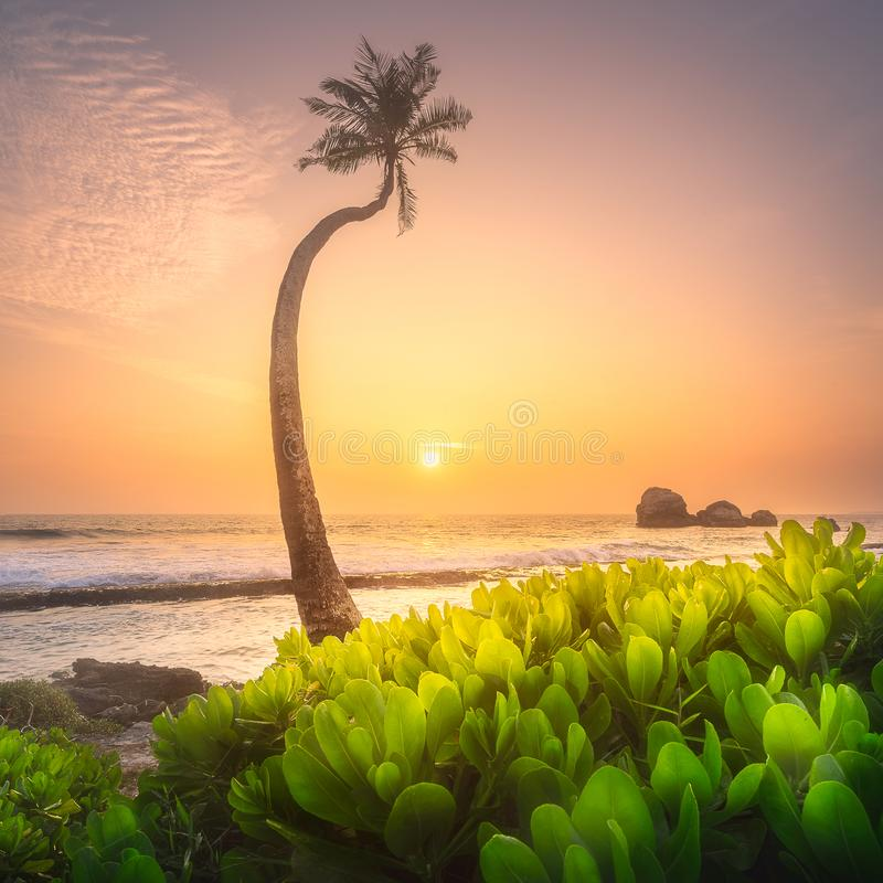 Download Tree Under The Water And Coast Of Sri Lanka Beach Stock Photo - Image of bali, background: 111455192