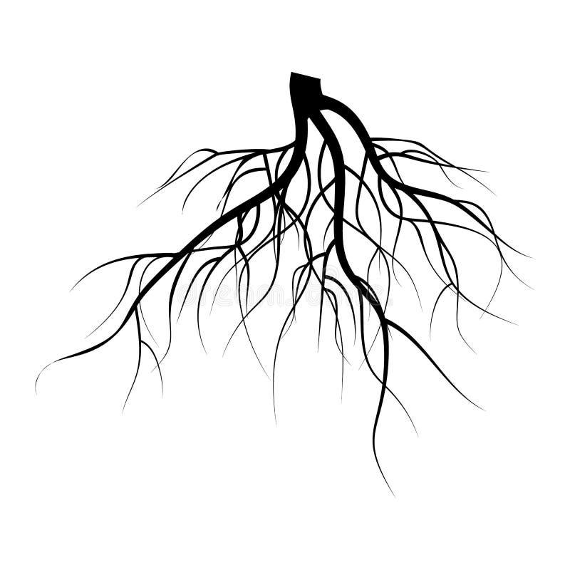 Tree Underground Roots Vector Set. Illustration Isolated On White Background. Tree Underground Roots Vector Set. Illustration Isolated vector illustration