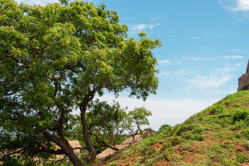 A tree on a upward hill stock image