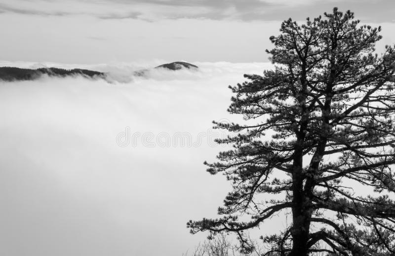 Tree, Valley Fog and Mountain Tops royalty free stock photography