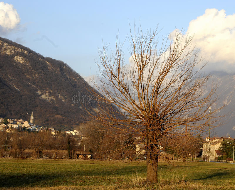 Tree in the valley stock photography
