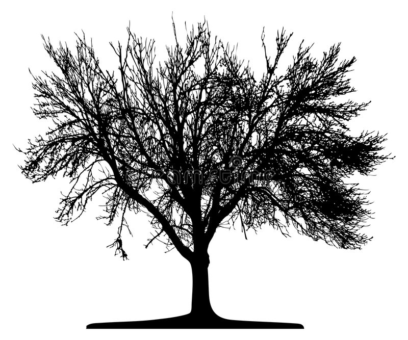 Tree (vector) royalty free illustration