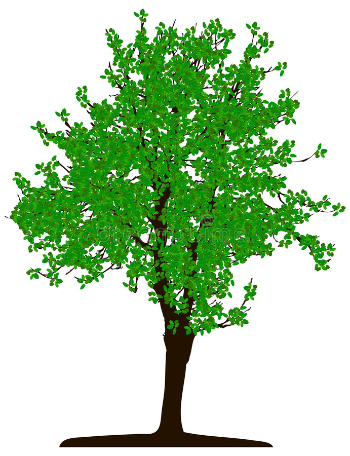 Tree (vector) vector illustration