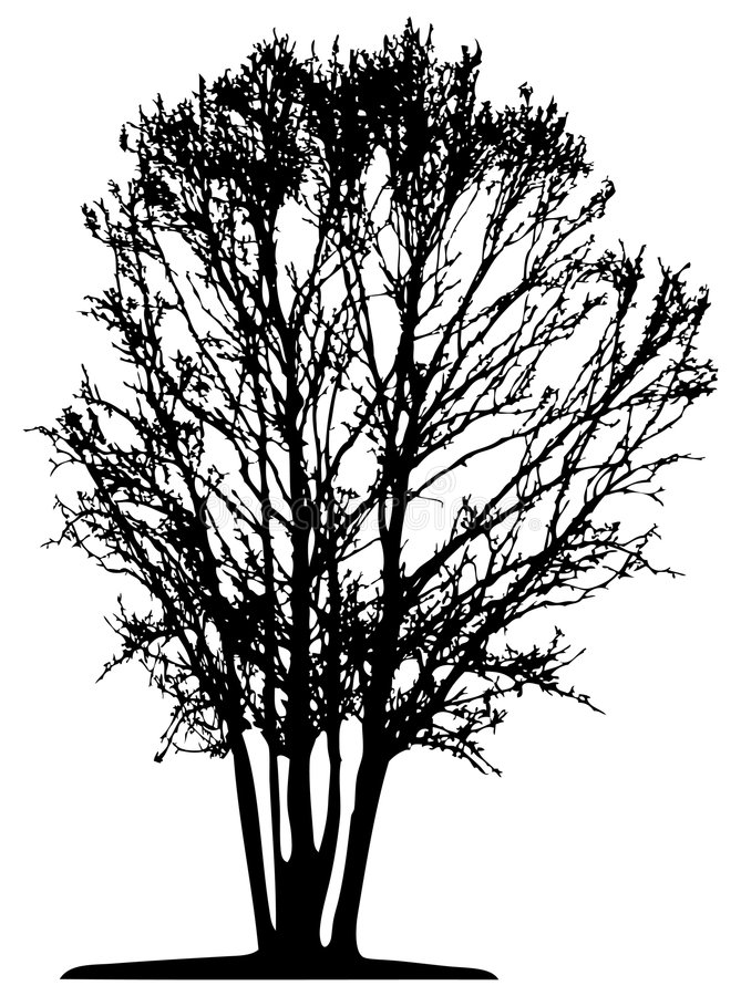 Tree (vector) stock illustration