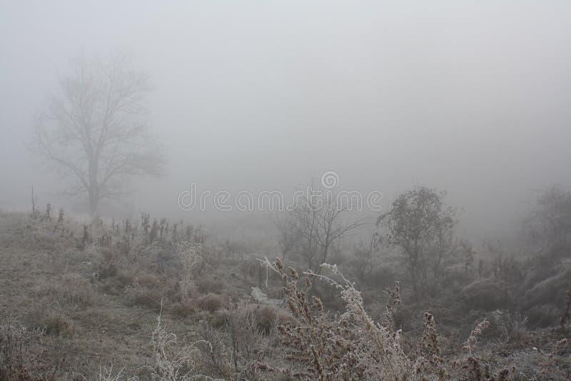 Tree in fog stock photos