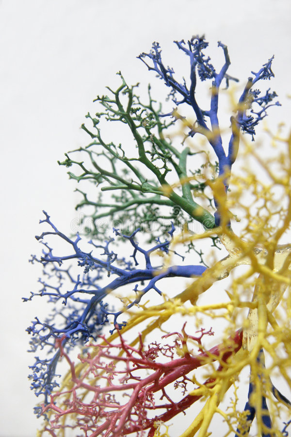 Tree of veins 2. A cast of arteries / veins used for medical purposes royalty free stock images