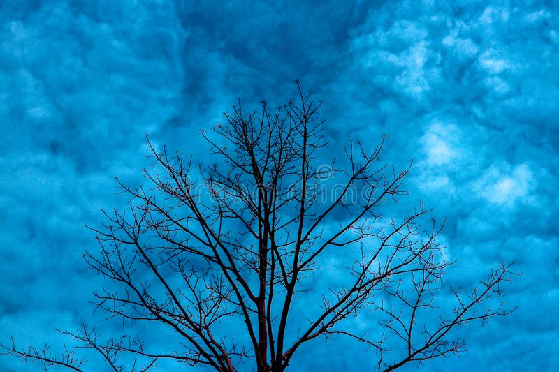 Tree Vektor. The tree has no leaves in the middle royalty free stock images