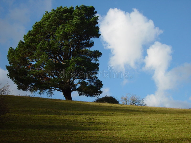 Tree versus clouds royalty free stock images