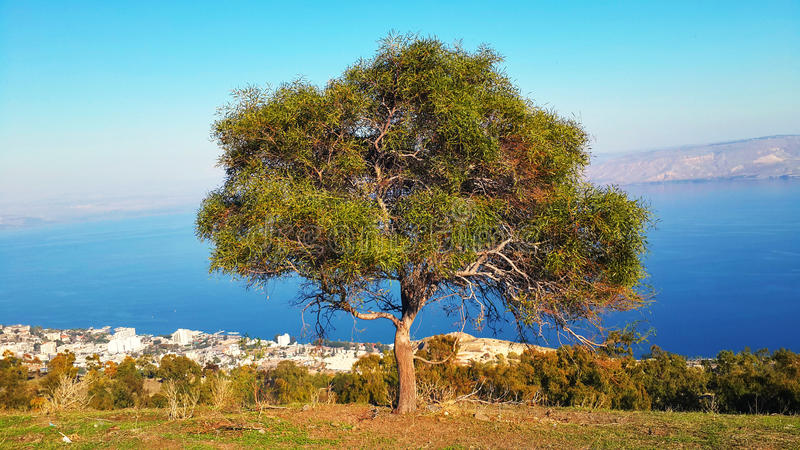 Tree with view to Sea of Galilee lake royalty free stock photo