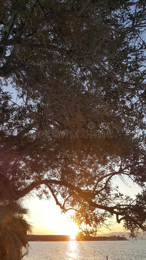 Tree. Views of kalem island stock image
