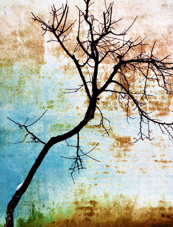Download Tree On A Wall Royalty Free Stock Photos - Image: 7264338